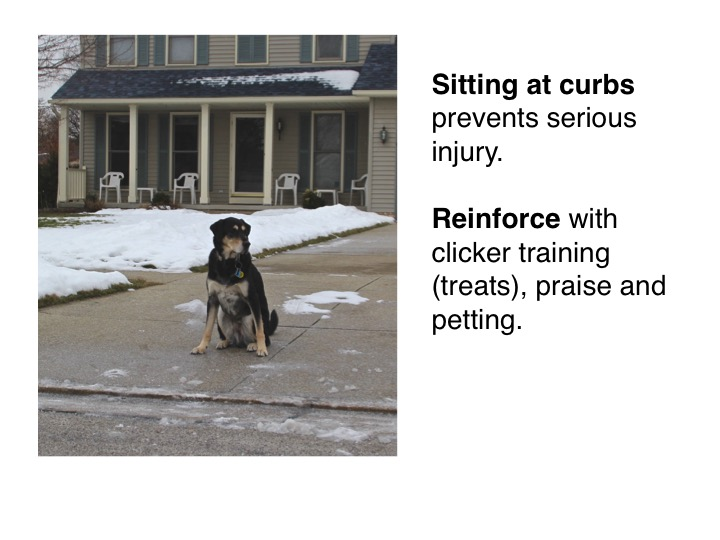 Dog-Training-cleveland-5